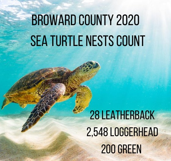 so far in 2020 there have been 28 leatherback nests, 2548 loggerhead nests, and 200 green sea turtle nests