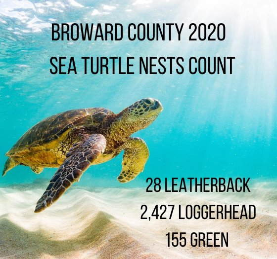so far in 2020 there have been 28 leatherback nests, 2427 loggerhead nests, and 155 green sea turtle nests
