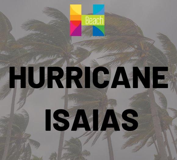 palm trees in hurricane wind