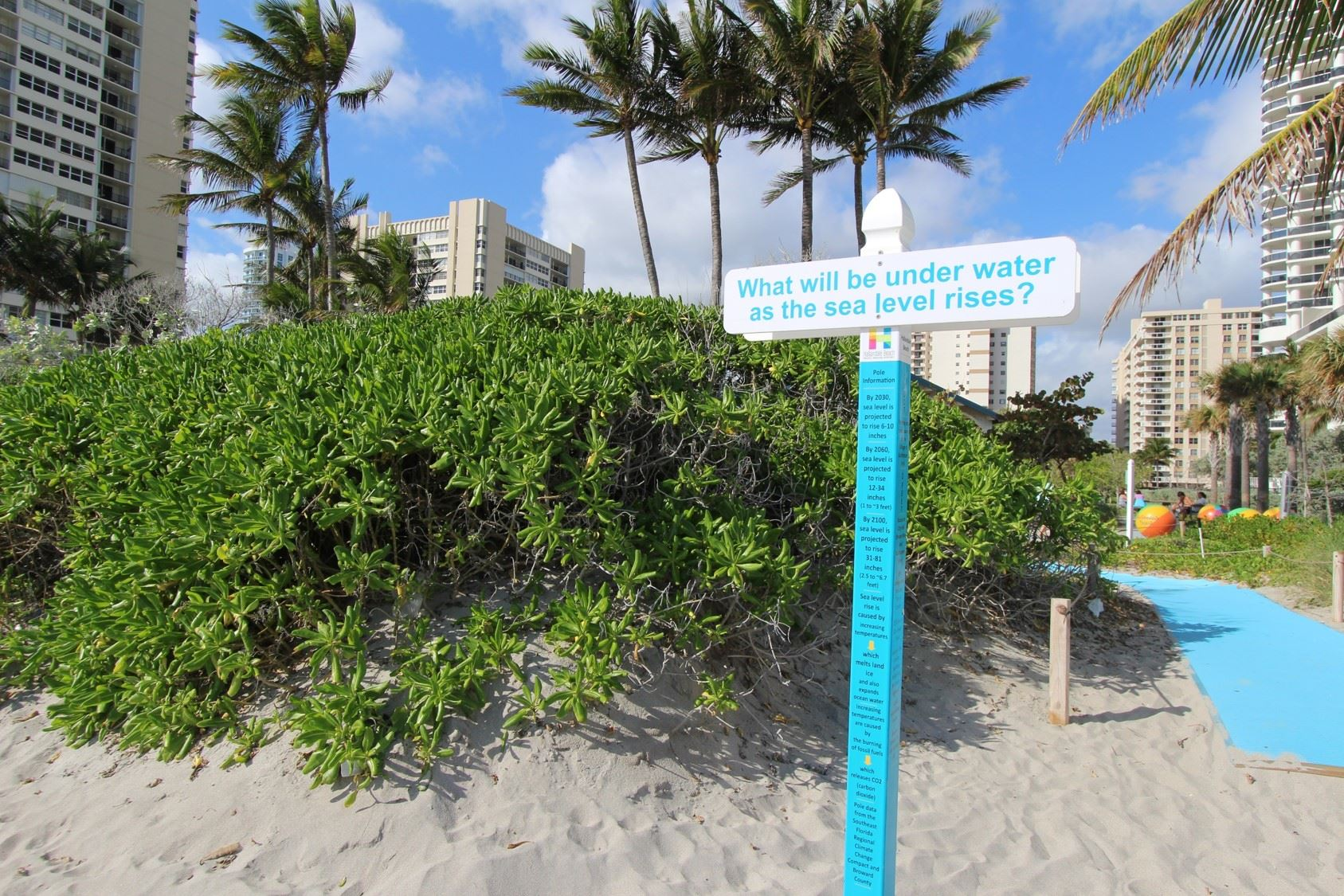 "beach dune plant in the background of a sea level rise awareness pole which is a bright blue pole with information on it and a topper which says ""what will be under water as the sea level rises?"""